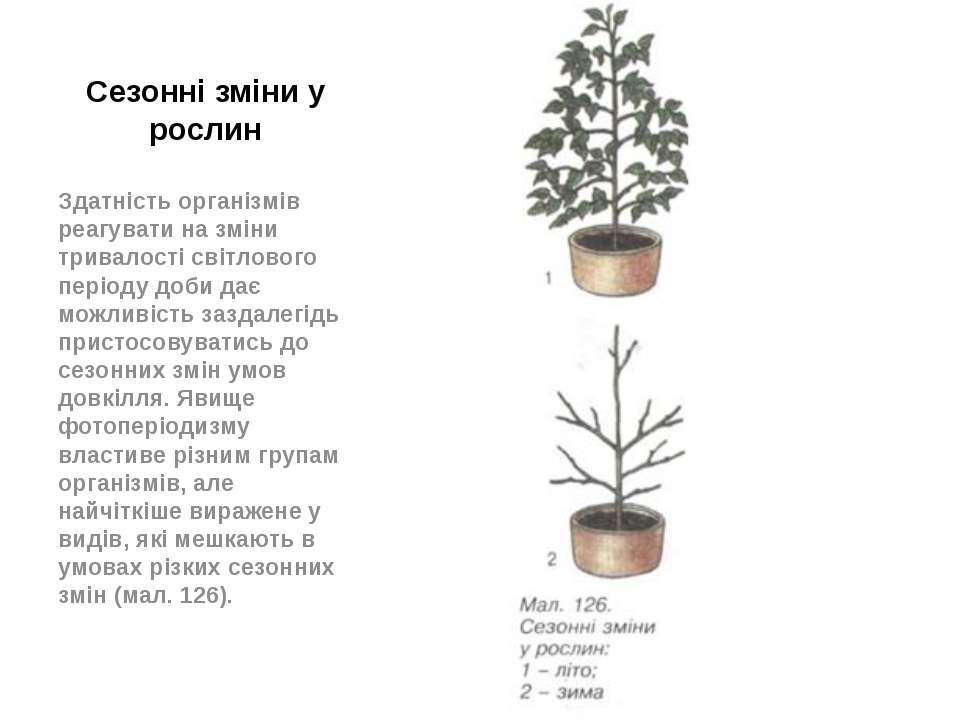 Сезонні зміни у рослин Здатність організмів реагувати на зміни тривалості сві...