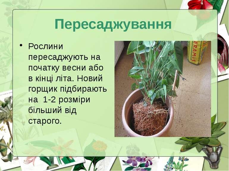 Пересаджування Рослини пересаджують на початку весни або в кінці літа. Новий ...