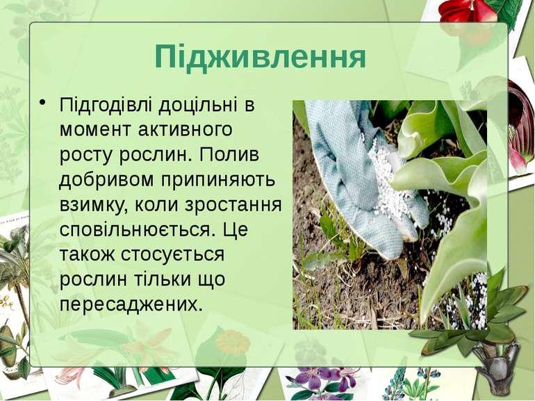 Підживлення Підгодівлі доцільні в момент активного росту рослин. Полив добрив...