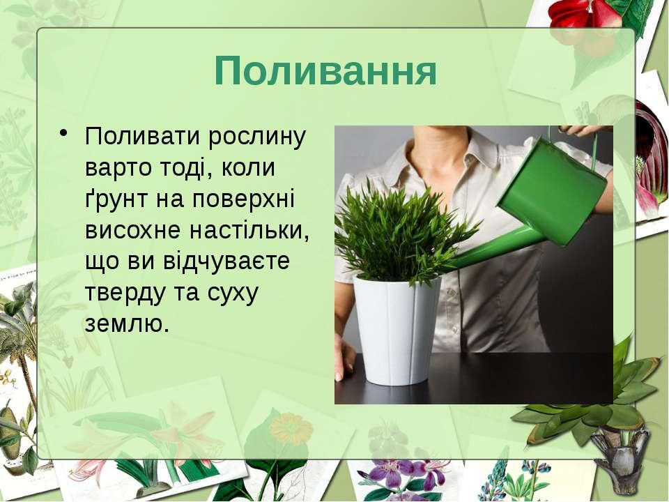 Поливання Поливати рослину варто тоді, коли ґрунт на поверхні висохне настіль...