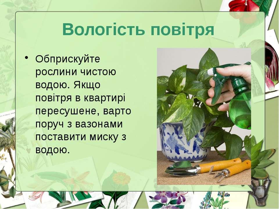 Вологість повітря Обприскуйте рослини чистою водою. Якщо повітря в квартирі п...
