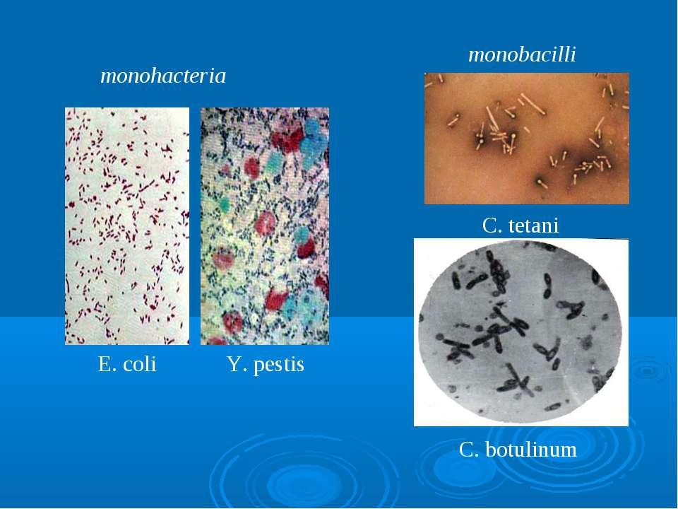 monohacteria monobacilli E. coli Y. pestis C. tetani C. botulinum