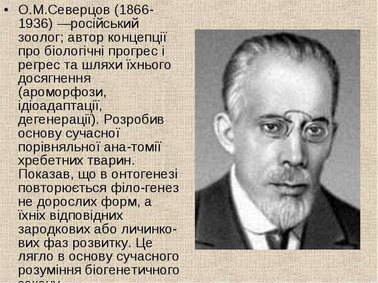 О.М.Северцов (1866-1936) —російський зоолог; автор концепції про біологічні п...