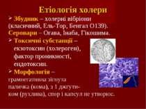 Етіологія холери Збудник – холерні вібріони (класичний, Ель-Тор, Бенгал О139)...
