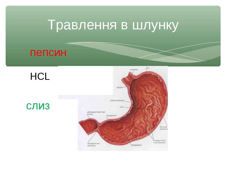 Травлення в шлунку пепсин НСL слиз
