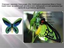 Птахокрил королеви Олександри. (Лат. Ornithoptera alexandrae) Живе в Папуа - ...