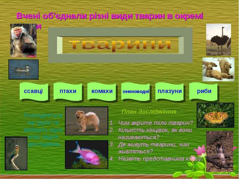 Вчені об'єднали різні види тварин в окремі класи ссавці птахи комахи земновод...