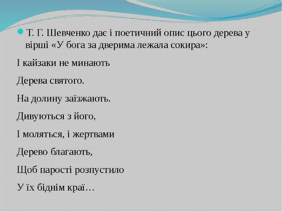 Т. Г. Шевченко дає і поетичний опис цього дерева у вірші «У бога за дверима л...