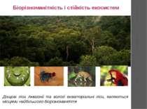 Біорізноманітність і стійкість екосистем Дощові ліси Амазонії та вологі екват...