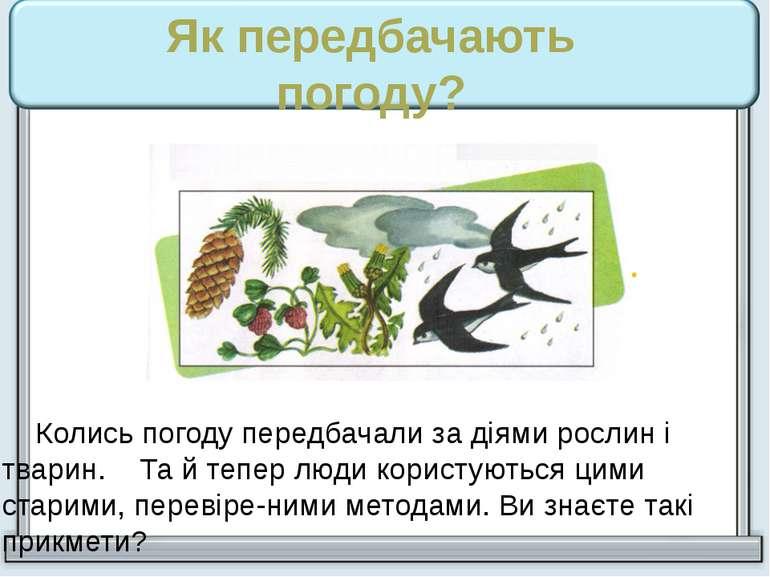 Колись погоду передбачали за діями рослин і тварин. Та й тепер люди користуют...