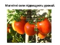 Магнітні сили підвищують урожай.