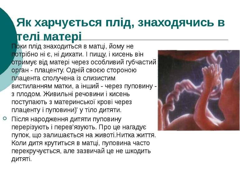 Як харчується плід, знаходячись в телі матері Поки плід знаходиться в матці, ...