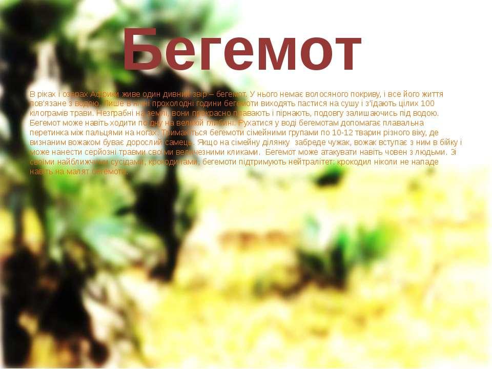 Бегемот В ріках і озерах Африки живе один дивний звір – бегемот. У нього нема...