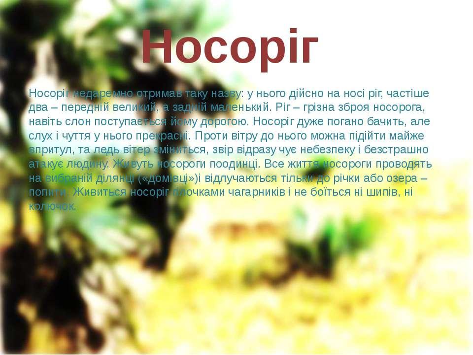 Носоріг Носоріг недаремно отримав таку назву: у нього дійсно на носі ріг, час...