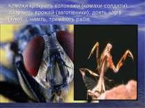 Комахи крокують колонами (комахи-солдати), збирають врожай (заготівники), доя...