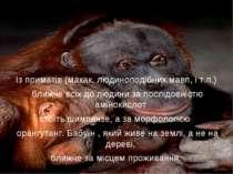 Із приматів (макак, людиноподібних мавп, і т.п.) ближче всіх до людини за пос...