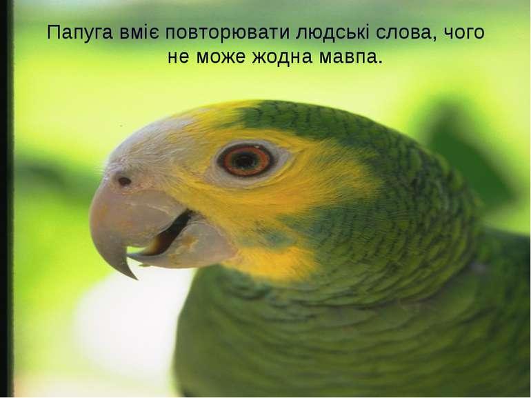 Папуга вміє повторювати людські слова, чого не може жодна мавпа.