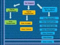 Клас Круглороті Підтип Черепні або Хребетні Клас Сальпи Клас Асцидії Підтип П...