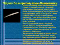 Підтип Безчерепні, Клас Ланцетники Тіло ланцетника стисле з боків, немає чере...