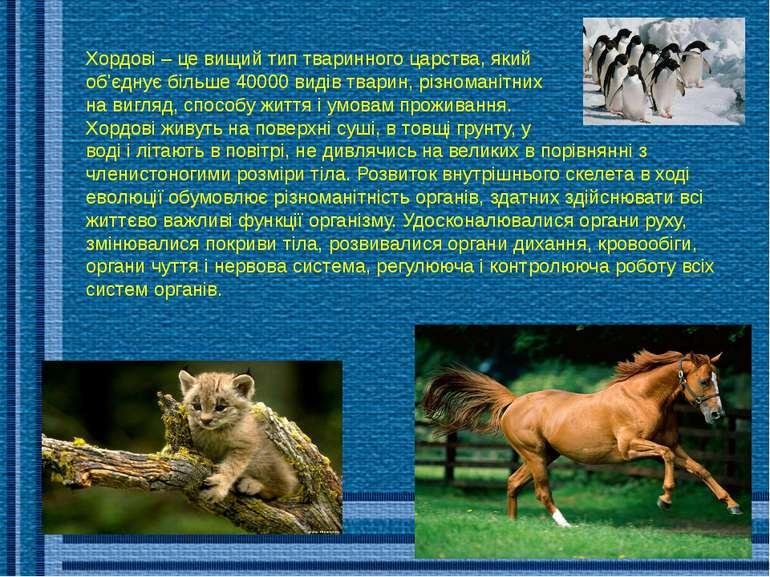 Хордові – це вищий тип тваринного царства, який об'єднує більше 40000 видів т...
