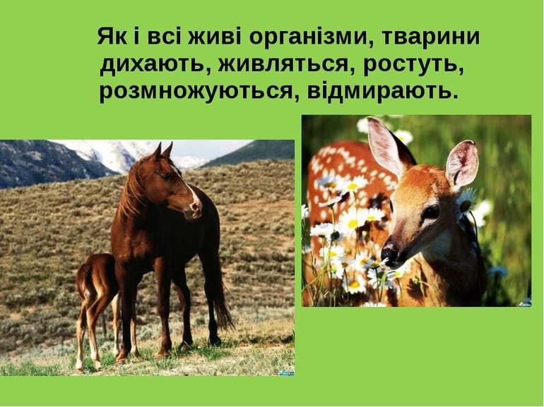 Як і всі живі організми, тварини дихають, живляться, ростуть, розмножуються, ...