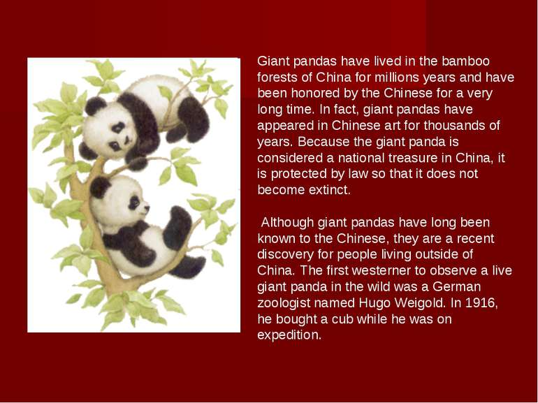 Giant pandas have lived in the bamboo forests of China for millions years and...