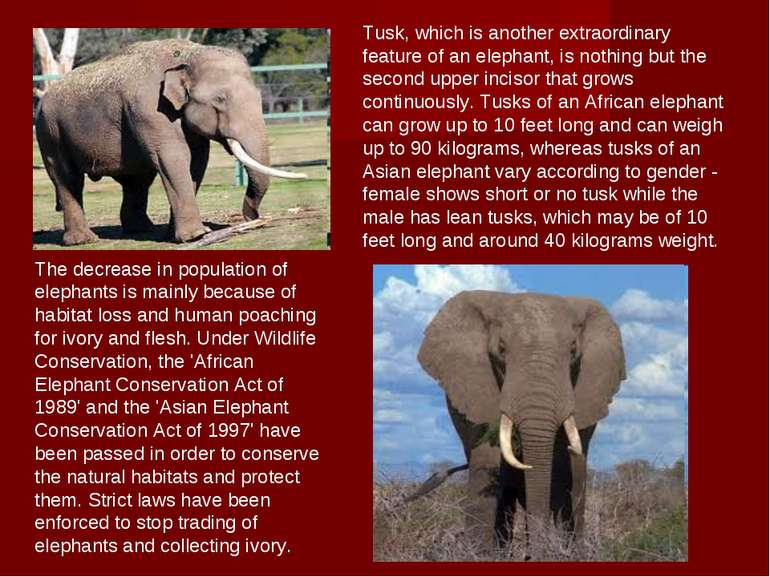The decrease in population of elephants is mainly because of habitat loss and...