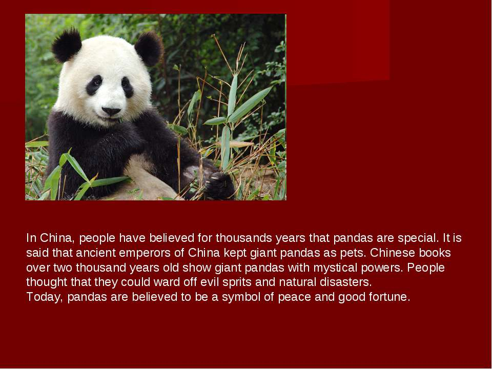 In China, people have believed for thousands years that pandas are special. I...
