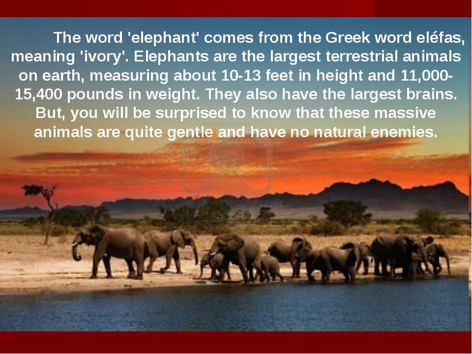 The word 'elephant' comes from the Greek word eléfas, meaning 'ivory'. Elepha...