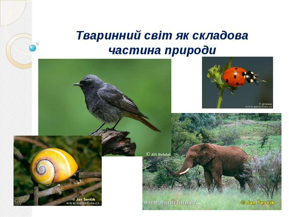 Тваринний світ як складова частина природи