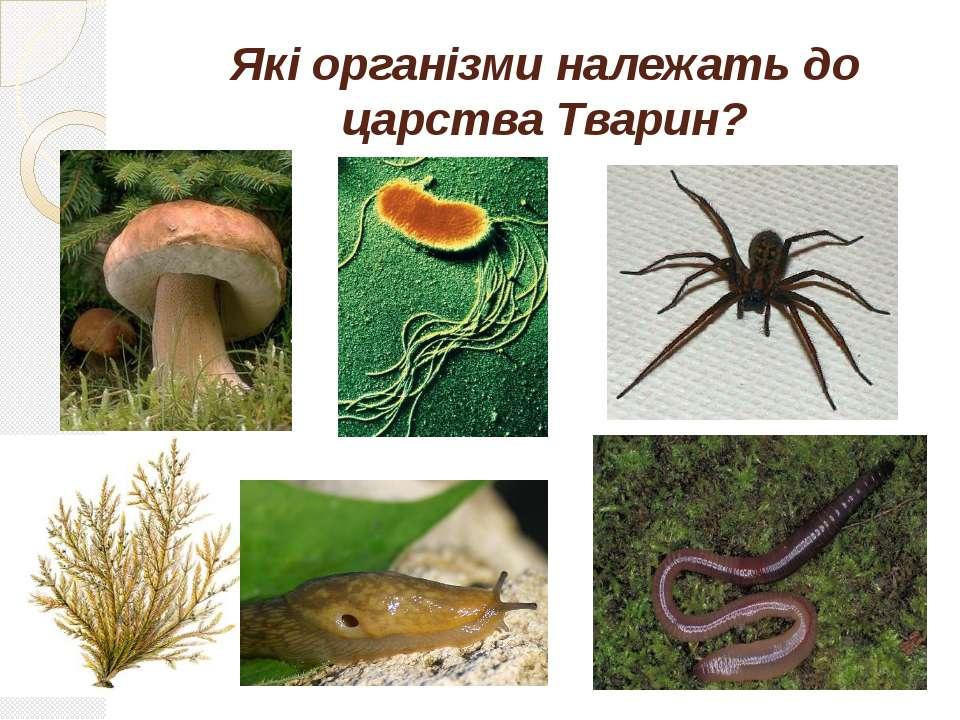 Які організми належать до царства Тварин?