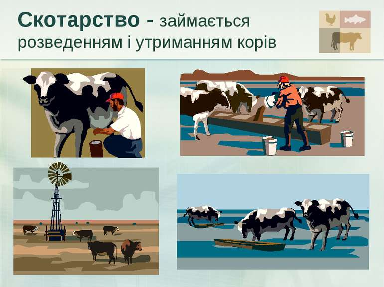Скотарство - займається розведенням і утриманням корів