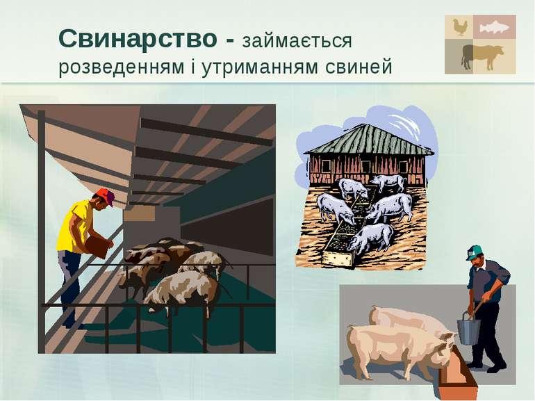 Свинарство - займається розведенням і утриманням свиней