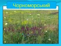 Чорноморський