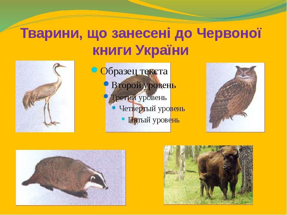 Тварини, що занесені до Червоної книги України