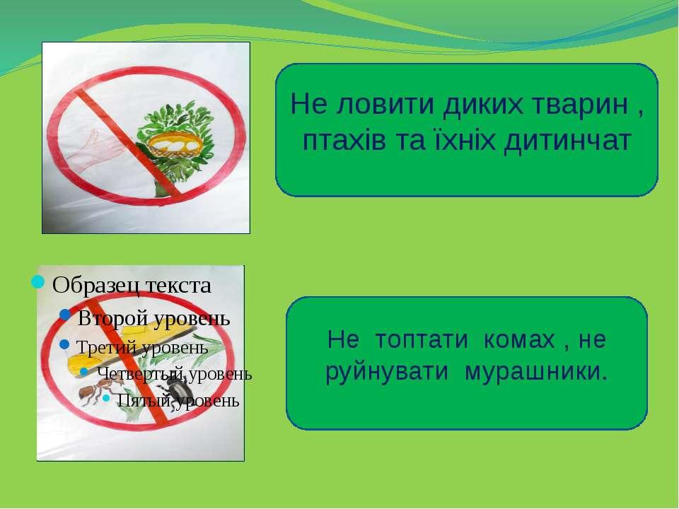 Не ловити диких тварин , птахів та їхніх дитинчат Не топтати комах , не руйну...