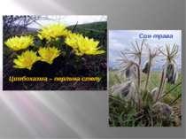 Цимбохазма – перлина степу Сон-трава