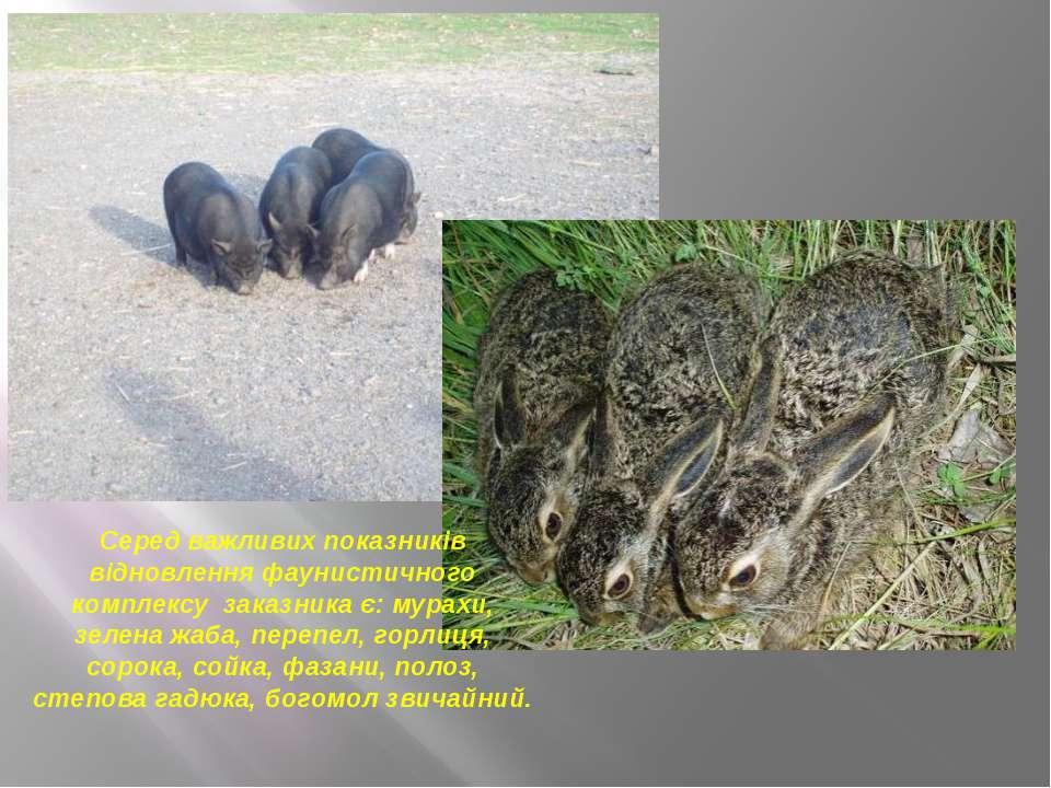 Серед важливих показників відновлення фаунистичного комплексу заказника є: му...
