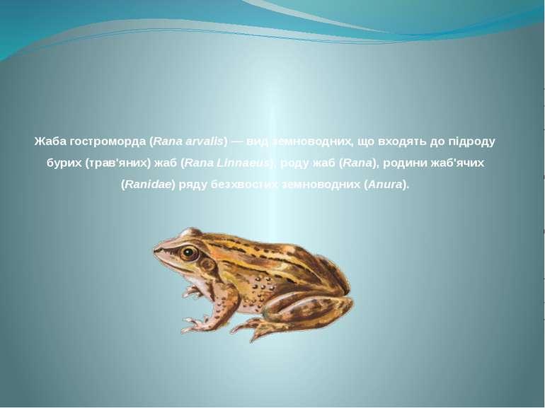 Жаба гостроморда (Rana arvalis) — вид земноводних, що входять до підроду бури...