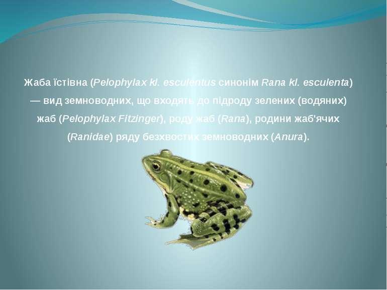 Жаба їстівна (Pelophylax kl. esculentus синонім Rana kl. esculenta) — вид зем...