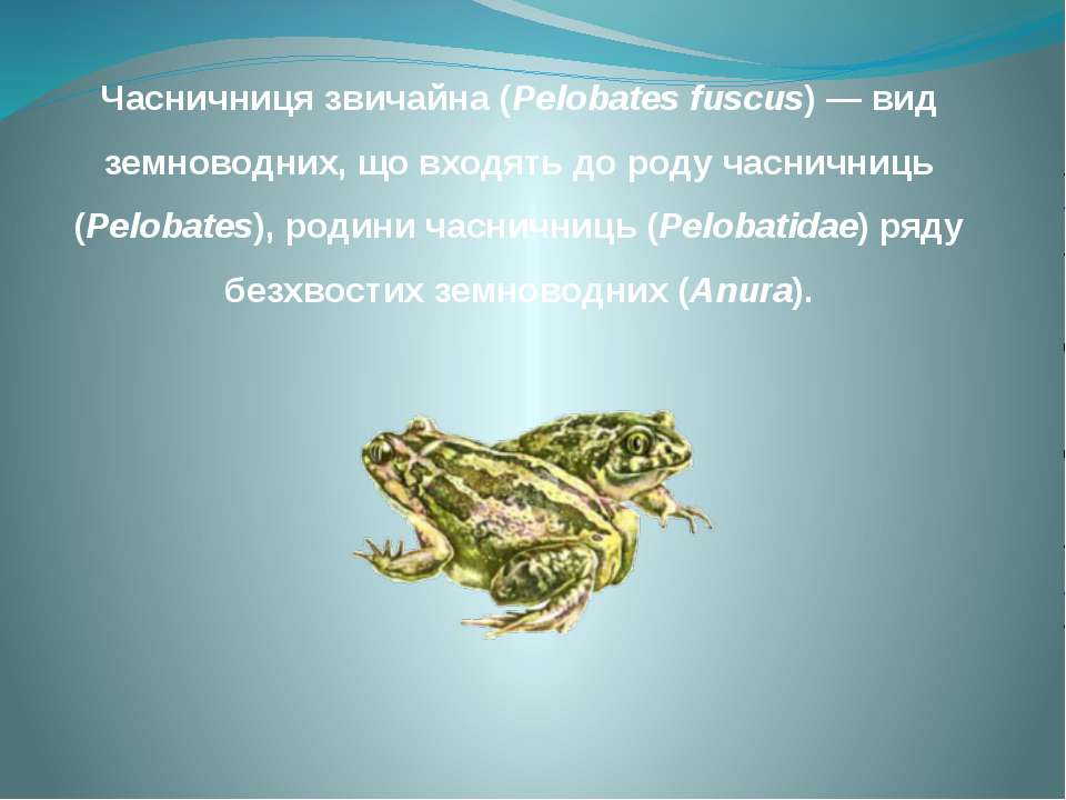 Часничниця звичайна (Pelobates fuscus) — вид земноводних, що входять до роду ...