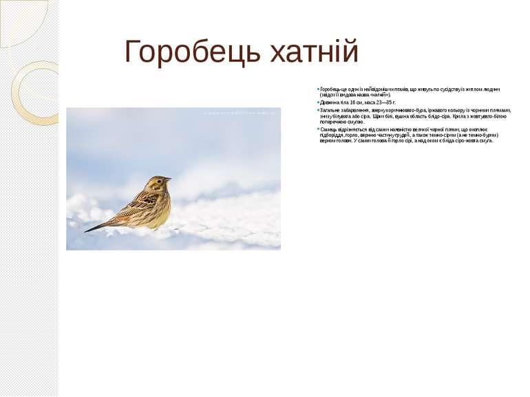Горобець хатній Горобець-це один із найвідоміших птахів, що живуть по сусідст...