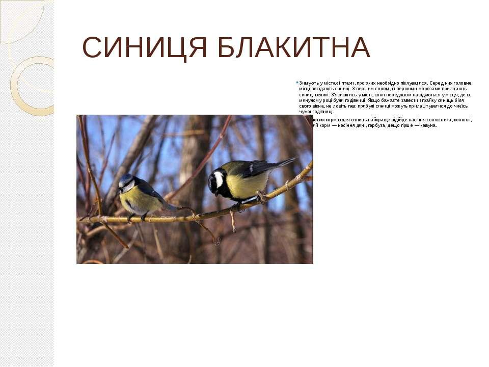 СИНИЦЯ БЛАКИТНА Зимують у містах і птахи, про яких необхідно піклуватися. Сер...