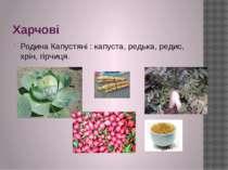 Харчові Родина Капустяні : капуста, редька, редис, хрін, гірчиця.