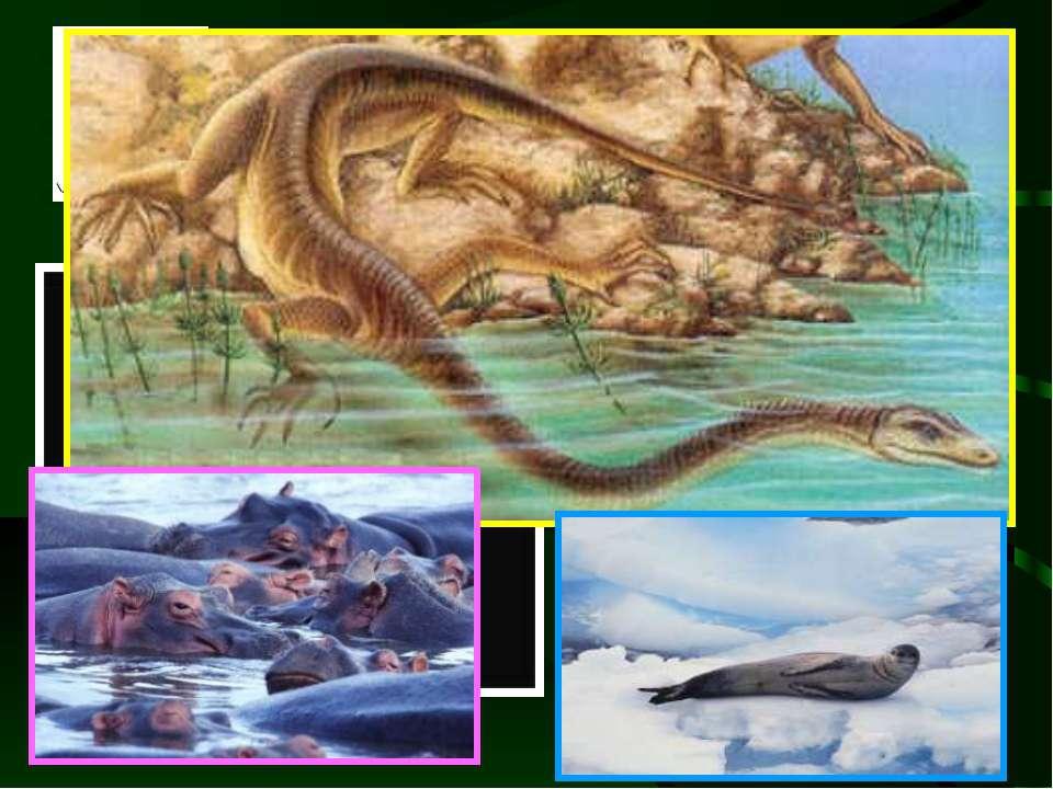 Tanystropheus sp. Це морський ящур Tanystropheus, «один із найдивакуватіших с...