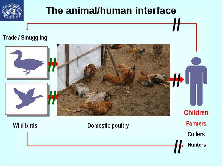 The animal/human interface // // // // //