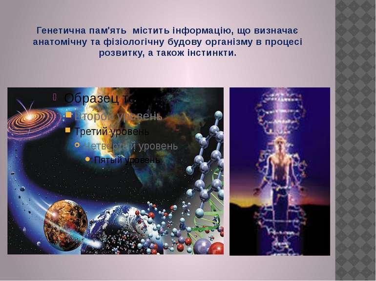 Генетична пам'ять містить інформацію, що визначає анатомічну та фізіологічну ...