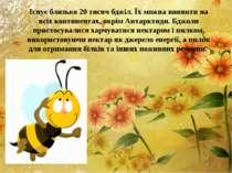 Існує близько 20 тисяч бджіл. Їх можна виявити на всіх континентах, окрім Ант...