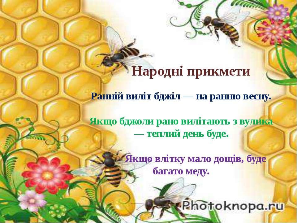 Народні прикмети Ранній виліт бджіл — на ранню весну. Якщо бджоли рано виліта...