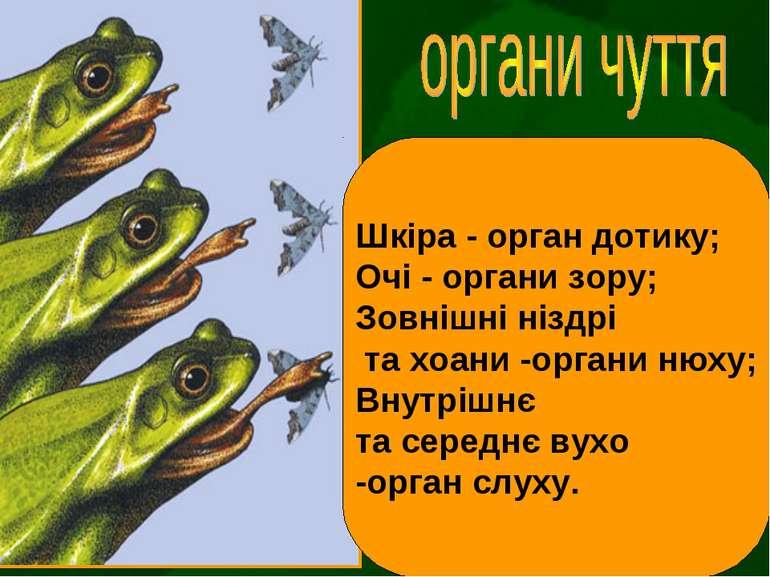 Шкіра - орган дотику; Очі - органи зору; Зовнішні ніздрі та хоани -органи нюх...